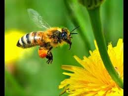 We Don't Need To Ban Pesticides To SaveBees
