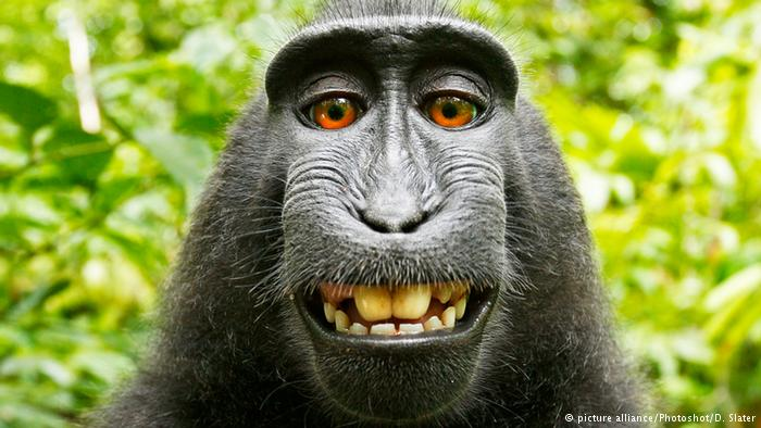 PETA praises monkey used to destroyphotographer