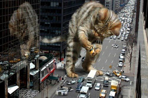 Study: Cats are destroying theenvironment