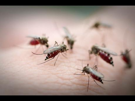 VetDay-CadoganMosquitoes