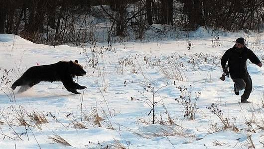 Environmentalists Seek More Grizzly Bear Attacks in Idaho, Montana andWyoming