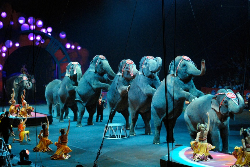 """Ringling Bros.' closing is not a """"win"""" for animal """"rights"""""""