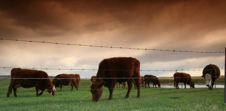 Greenpeace terrorists seek to destroy NZ dairyindustry