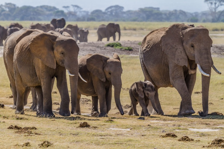 South African Animal Park Protects EndangeredSpecies