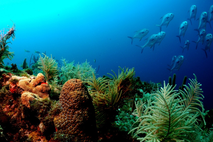 Coral Reefs ARE NOT Dying