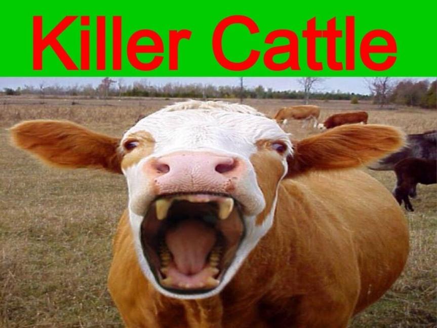 "MI animal ""rights"" activist supports cattleattacks"