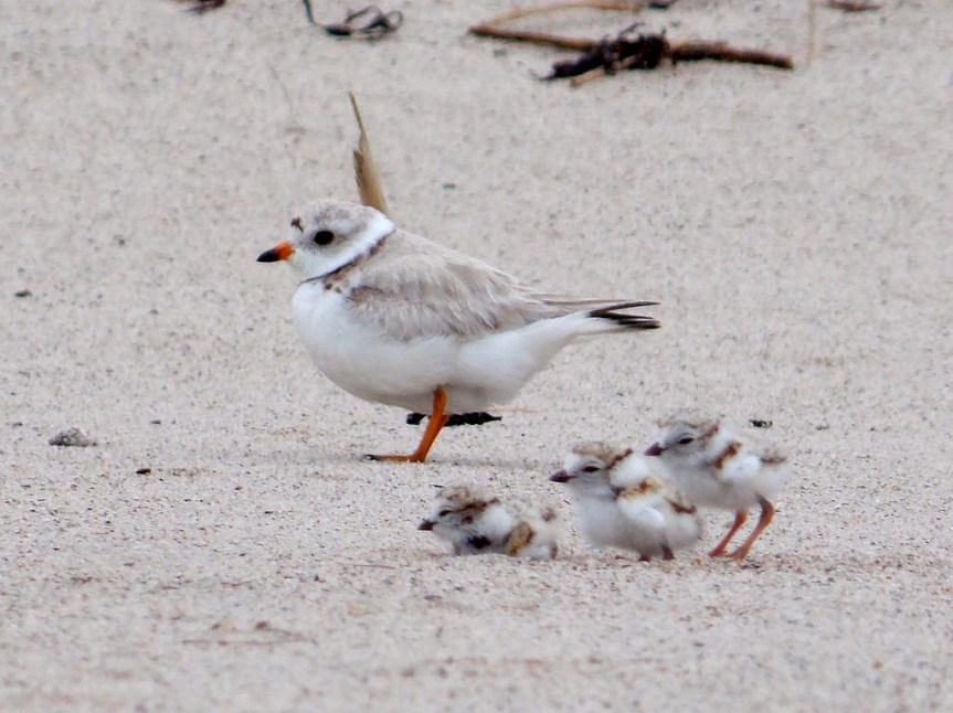 Environmentalists Condemn Protection For Endangered BirdSpecies