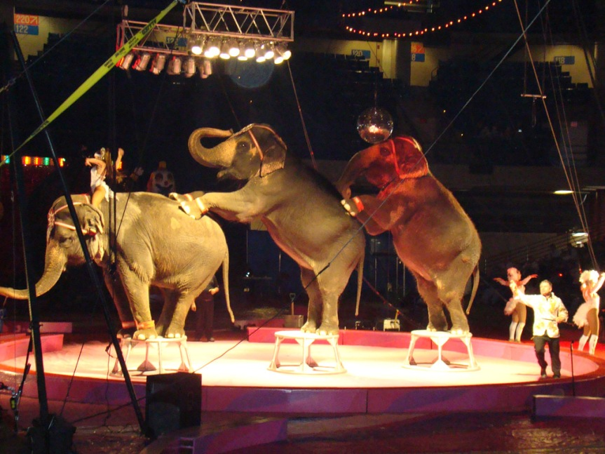 """Circus Owner Remains Defiant of Animal """"Rights"""" Critics"""