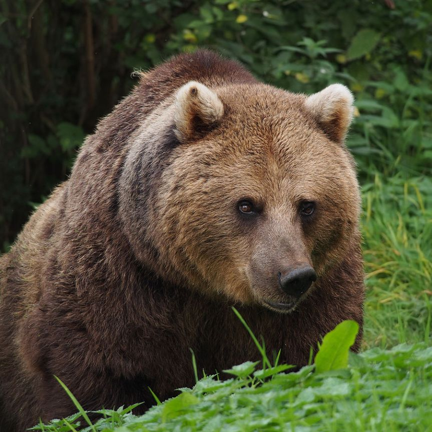 PETA Blames the Victim in Shanghai Zoo BearAttack