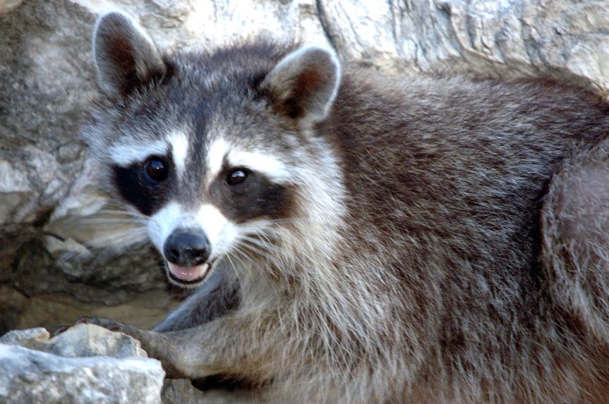 PETA Wants Virginians to Contract Rabies