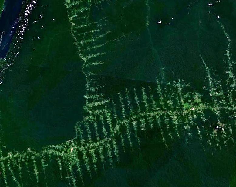 Enjoy the Deforestation,Brazil!
