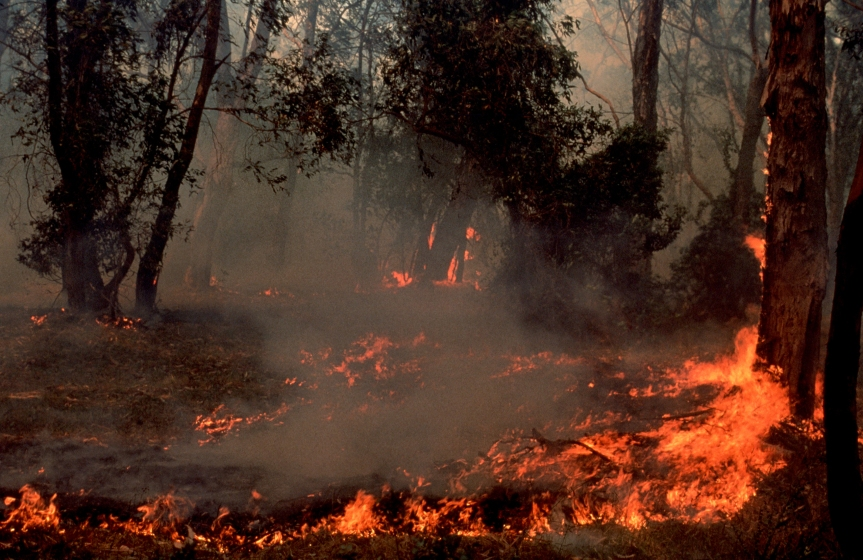 Aussie Police Strikeforce to Investigate Brushfire Arson, Climate Change Not aFactor